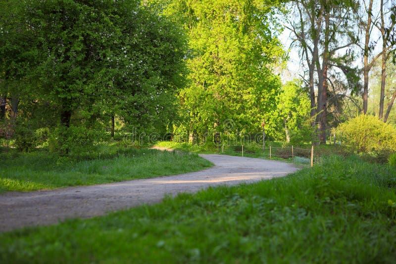 Грязная улица в парке лета стоковое изображение