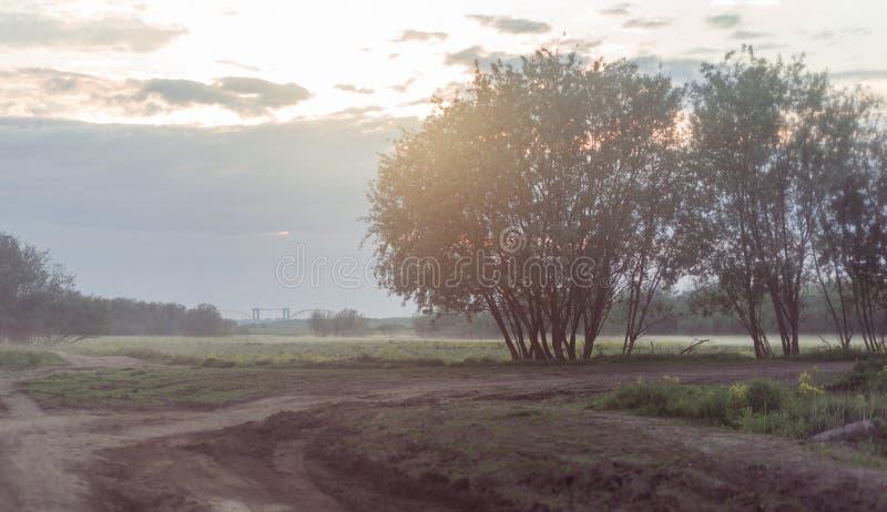 Грязная улица в пшеничном поле на туманном утре стоковая фотография