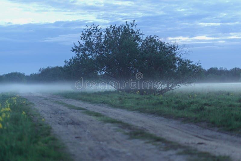 Грязная улица в пшеничном поле на туманном утре стоковые фото