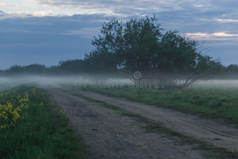 Грязная улица в пшеничном поле на туманном утре стоковые фотографии rf