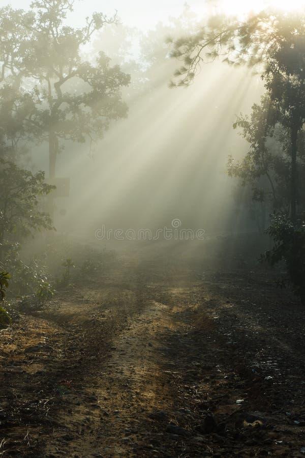 Грязная улица покрытая с туманом стоковые фото