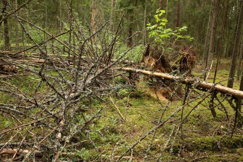 Грязный лес стоковое фото rf