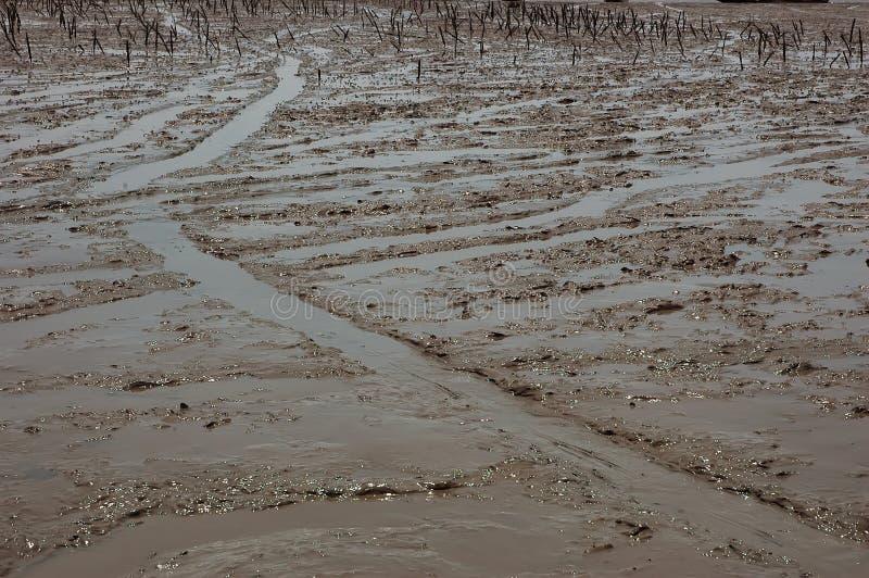 грязь пляжа стоковые фотографии rf