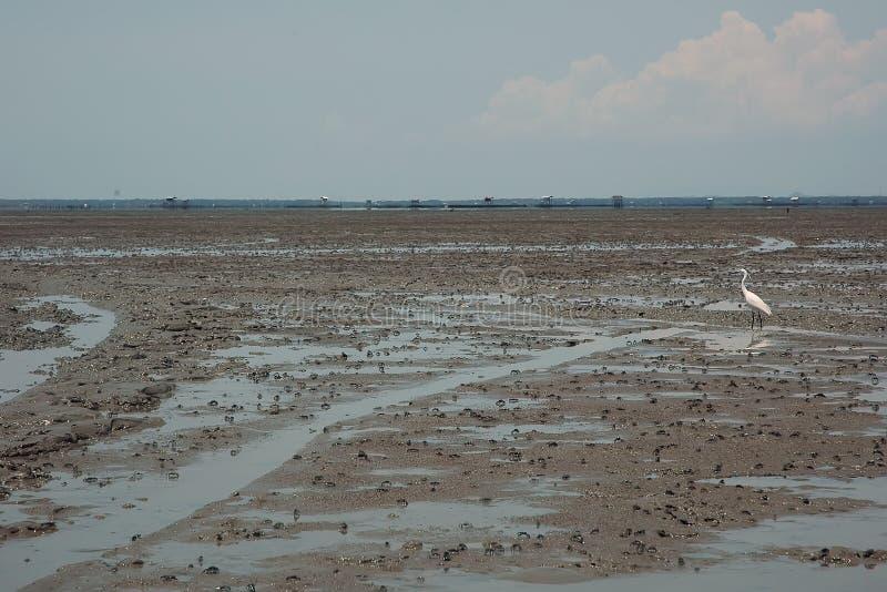 грязь пляжа стоковые изображения rf
