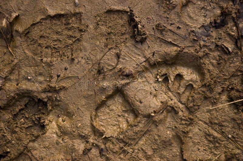 грязь следов ноги стоковое изображение rf
