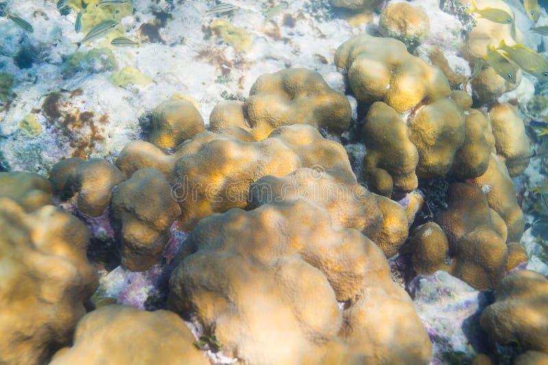 Губка коралла encrusting стоковые изображения rf