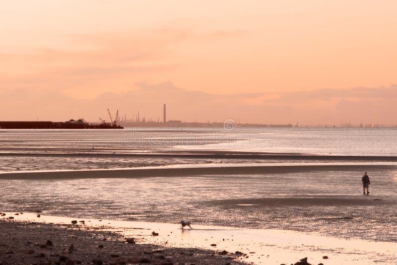 гулять захода солнца человека собаки пляжа стоковое изображение rf