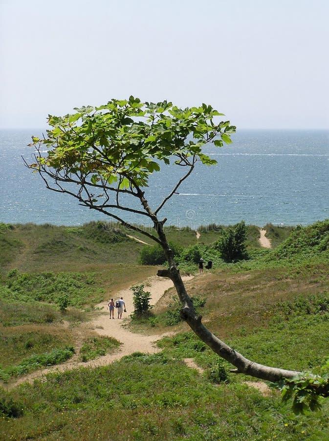 Гулять к пляжу стоковое изображение rf