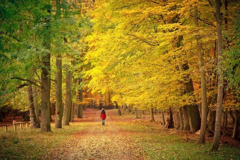 гулять парка осени стоковые фотографии rf