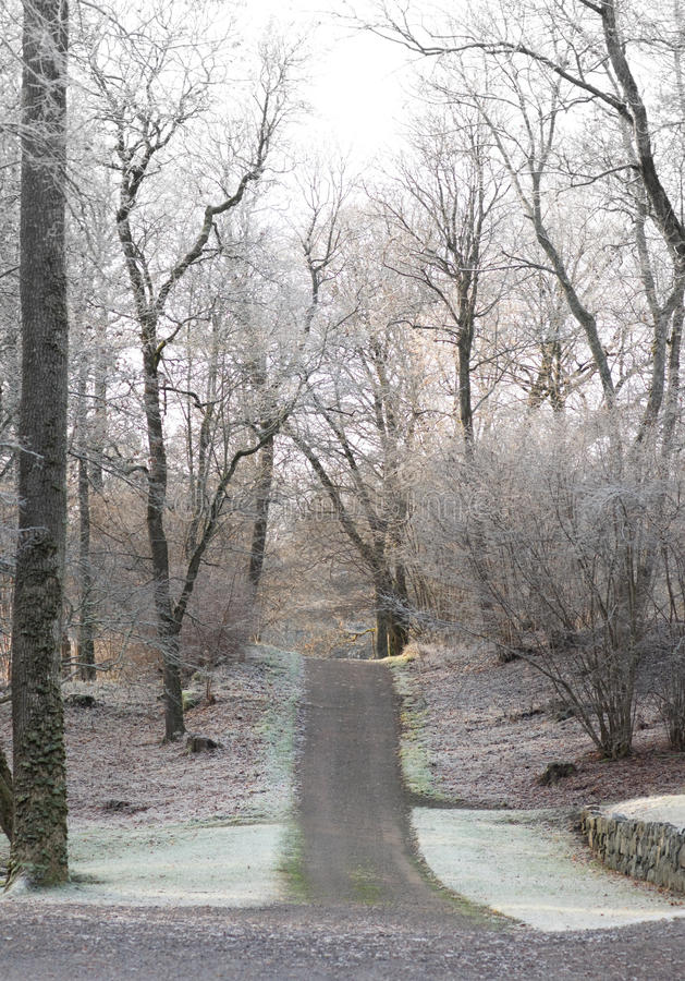 гулять путя стоковое изображение rf
