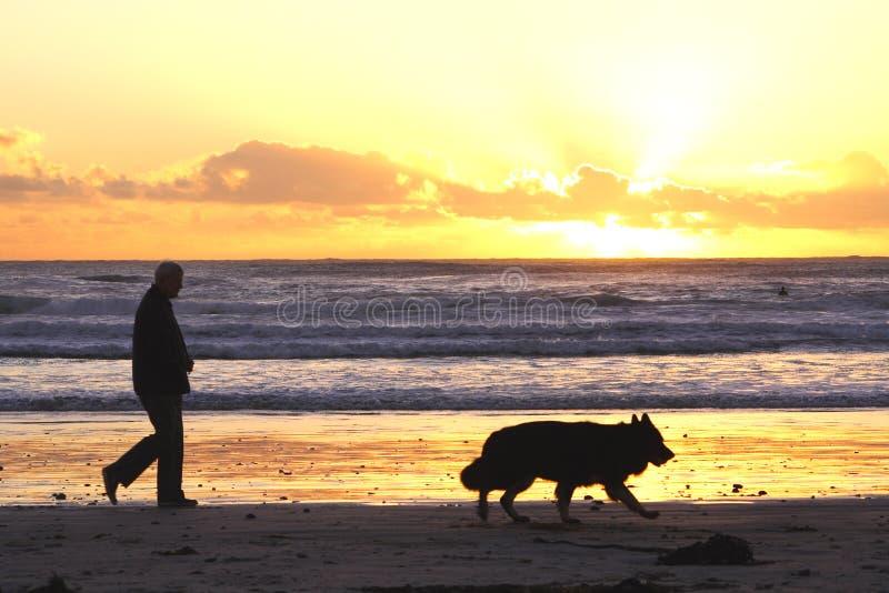 гулять собаки стоковые фото