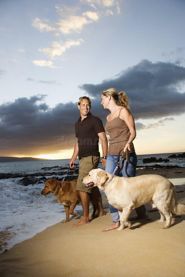 гулять собак пар пляжа стоковое изображение rf