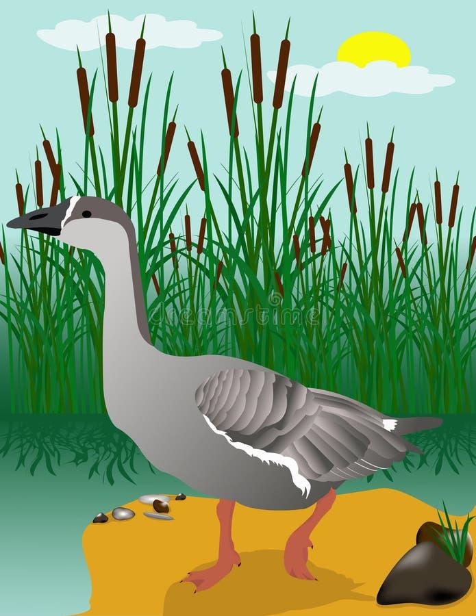 гулять gus травы бесплатная иллюстрация