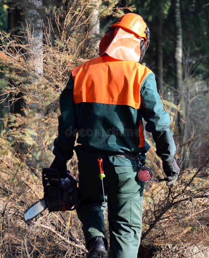 гулять lumberjack chainsaw стоковые изображения