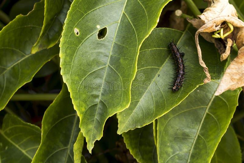 Гусеница на заводе стоковое изображение rf