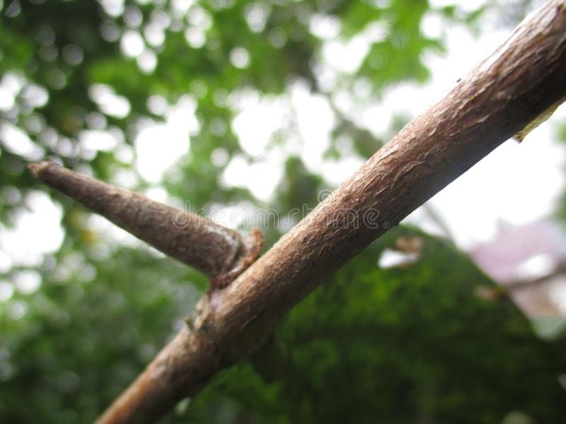 Гусеница уникально стоковая фотография rf
