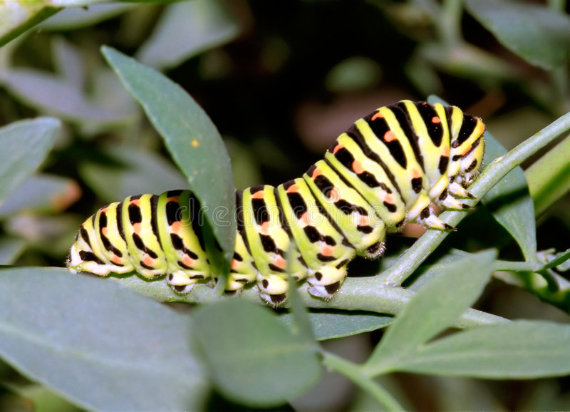 гусеница стоковая фотография