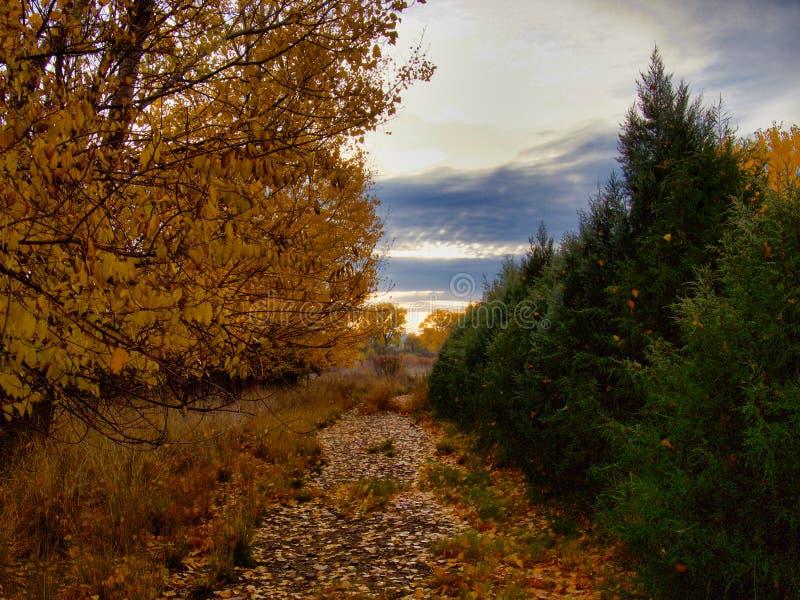 Густолиственный путь к реке стоковые фотографии rf