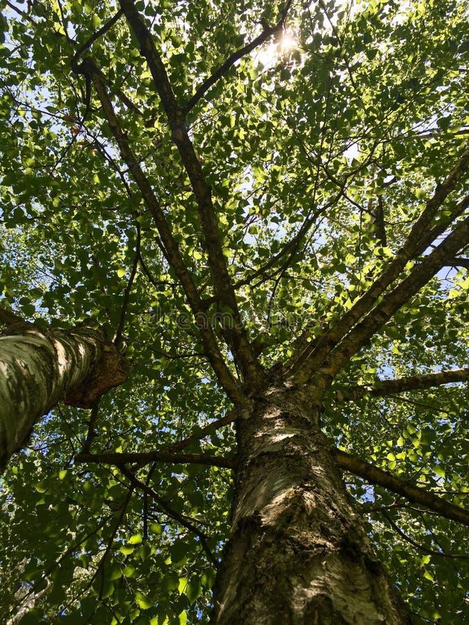 Густолиственная листва на деревьях стоковое фото rf