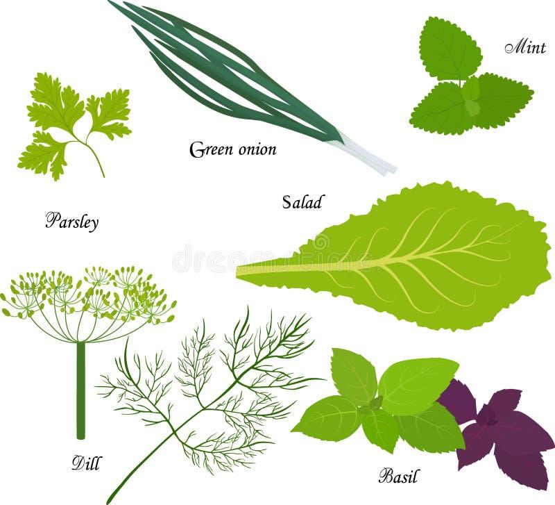 Густолиственные зеленые овощи, органический продукт для вегетарианской диеты бесплатная иллюстрация