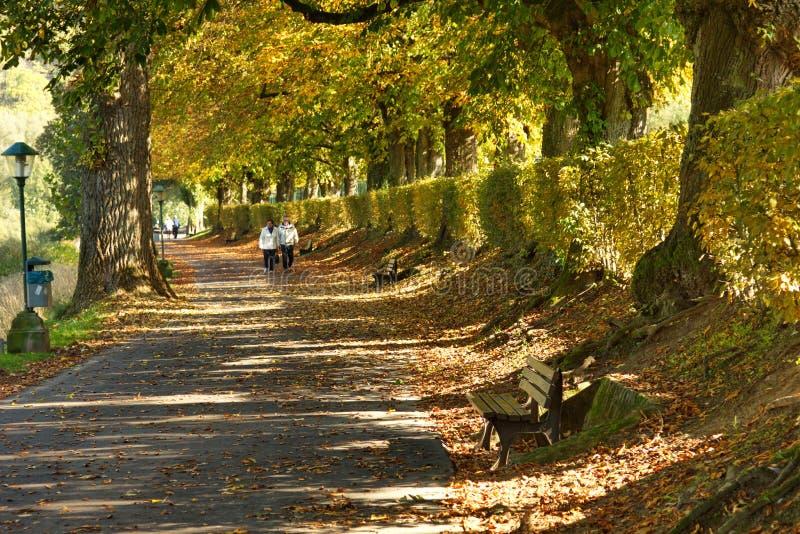 гулять людей парка стоковое изображение