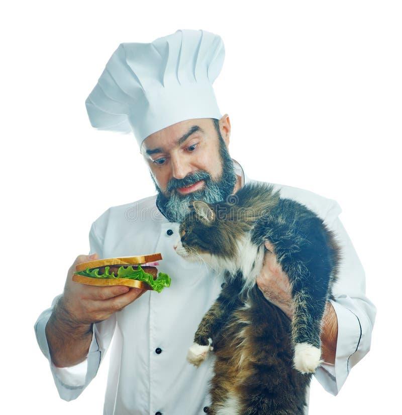 Главный кашевар держа сандвич и голодный кот стоковые фото