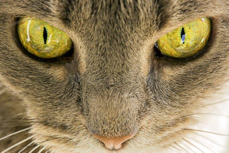 Глаза котов стоковое фото