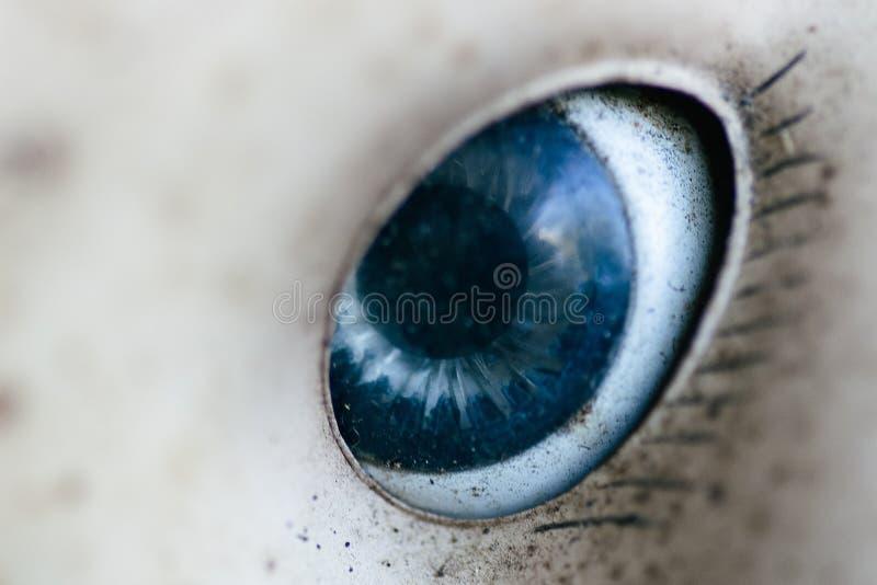 Глаза кукол приходят к жизни стоковые изображения