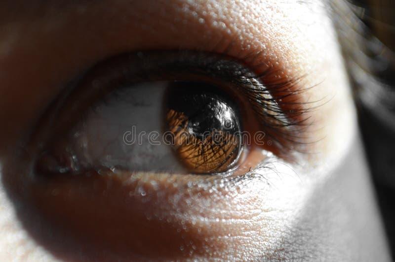 Глаза очевидца стоковое изображение