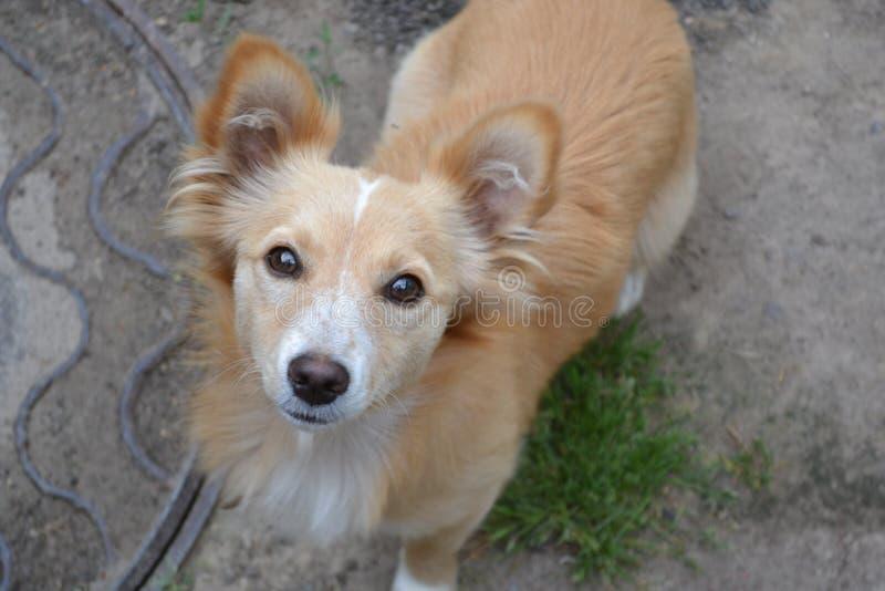 Глаза собаки стоковое изображение