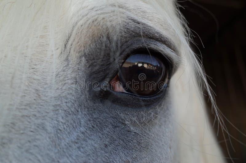 Глаз белой лошади стоковые фотографии rf