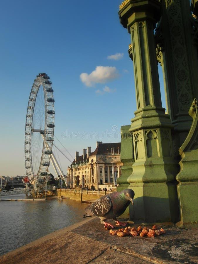 Глаз Лондона и птица стоковая фотография