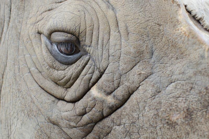 Глаз носорога стоковые изображения rf