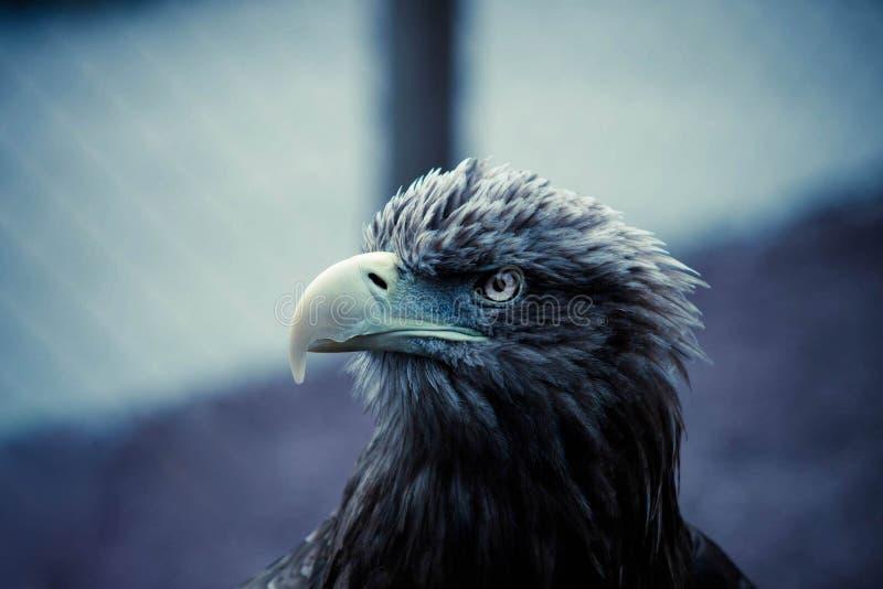 Глаз орла стоковое изображение rf