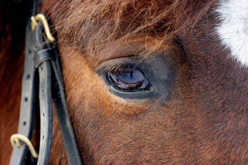 Глаз лошади в темноте, конце вверх стоковое изображение