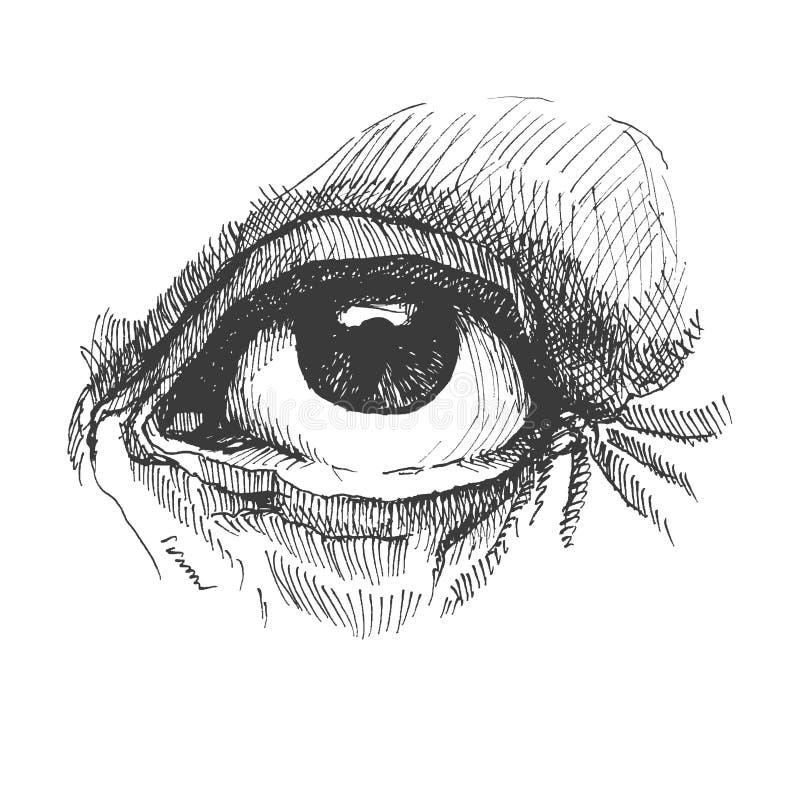 Глаз. Реалистическая иллюстрация вектора. Нарисованная рука. иллюстрация штока