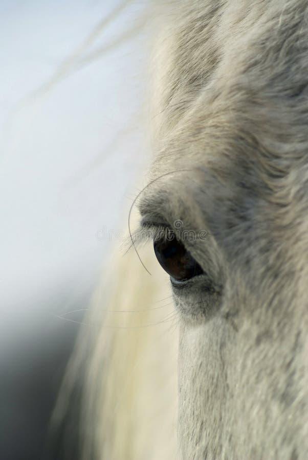 Глаз серой лошади стоковые фотографии rf