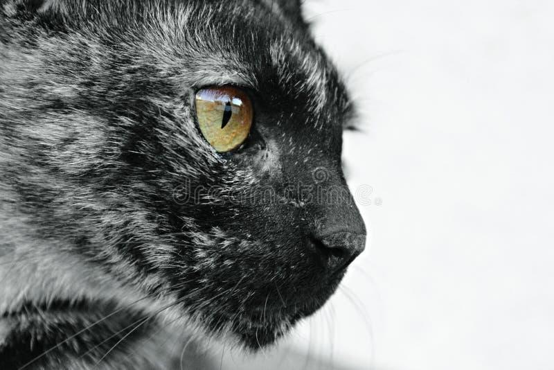 Глаз тигра стоковое фото rf