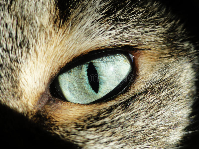 Глаз стоковая фотография rf
