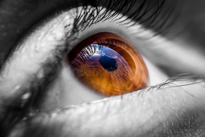 Глаз Brown людской стоковое изображение rf