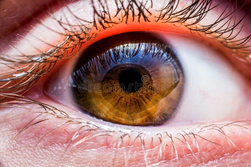 Глаз Brown людской стоковое изображение