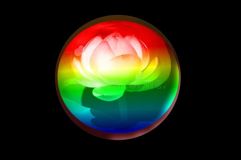 Глобус лотоса стоковое фото