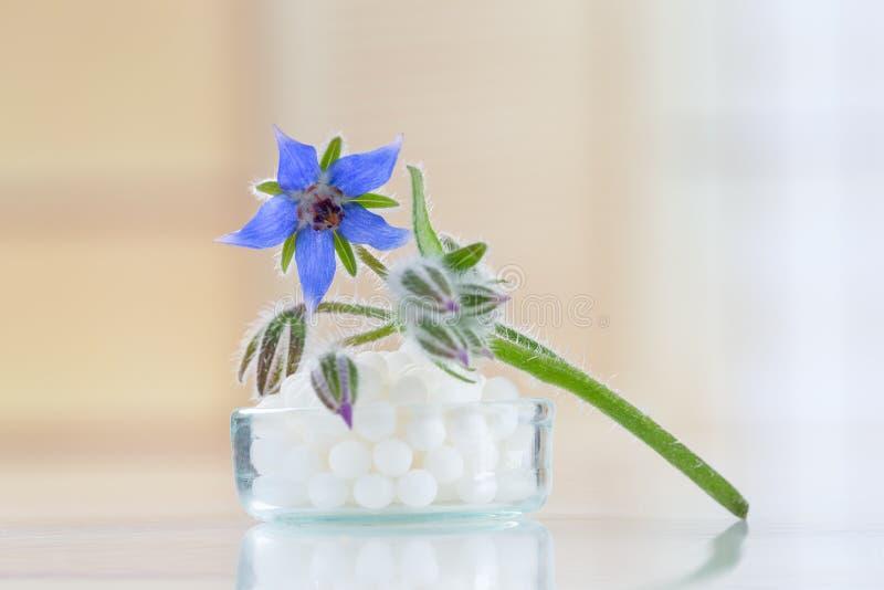 Глобулы гомеопатии с цветком borage стоковые фото