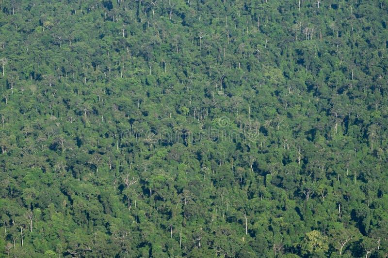 Глубокая ая-зелен предпосылка текстуры дерева джунглей леса стоковое фото rf