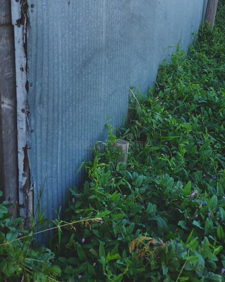 Глубокое ое-зелен стоковые фото