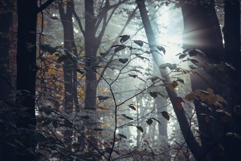 Глубоко в лесе в горах стоковое фото rf