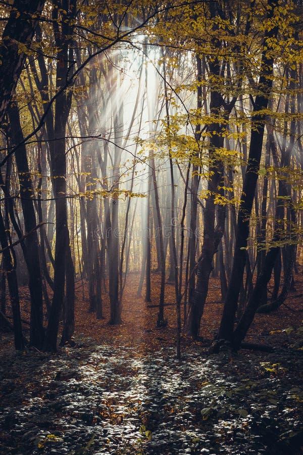 Глубоко в лесе в горах стоковая фотография rf