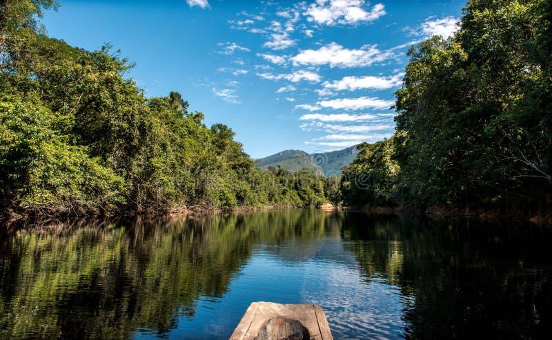 Глубоко в джунглях Амазонки стоковые изображения rf