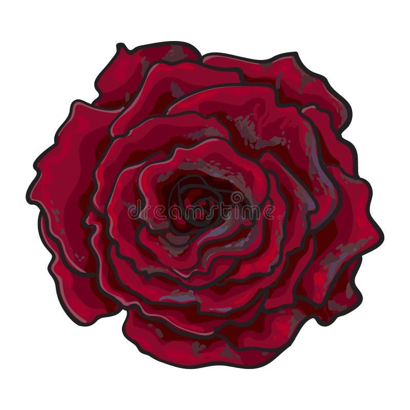 Глубоко - красный цвет, рубин поднял, изолированная взгляд сверху иллюстрация вектора эскиза бесплатная иллюстрация