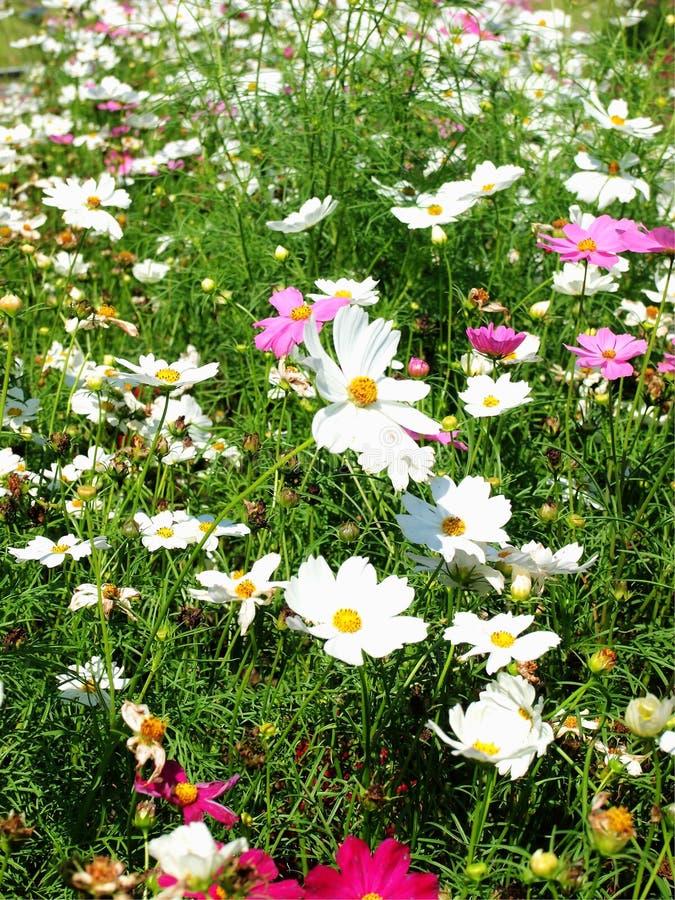 Глубоко - розовые цветки стоковое изображение